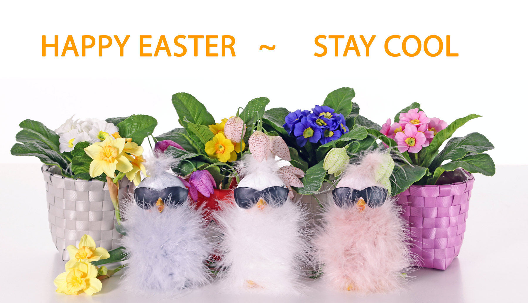 Happy Easter - Stay cool